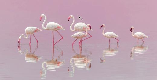 Resizing an image in Adobe Photoshop